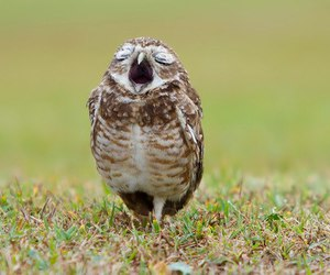 owl, animal, and sleep image
