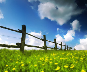 sky, fence, and flowers image