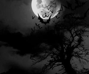 moon, bats, and dark image