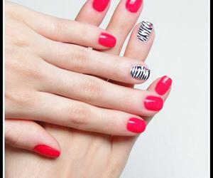 animal, nails, and pink image