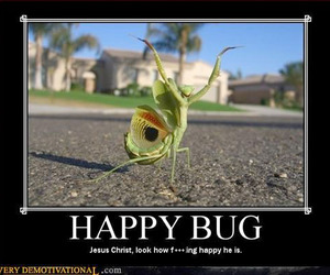 funny and happy bug image