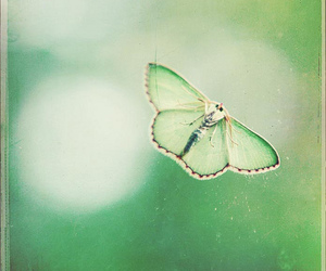 buterfly, green, and butterfly image