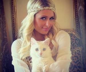 paris hilton, cat, and white image