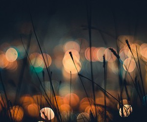 light, photography, and nature image