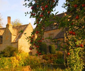 apples and countryside image