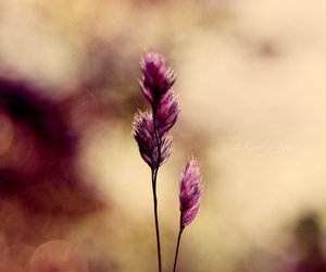 bokeh, flower, and purple image