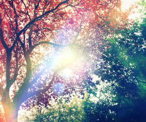 photography, sun, and trees image