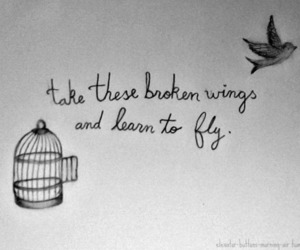 quote, bird, and fly image