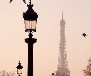 bird, eiffel tower, and lamp image