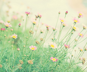 delicate, flowers, and lovely image