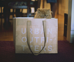 cat and urban outfitters image