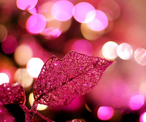 leaf and pink image