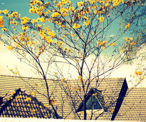 flower, roof, and sky image