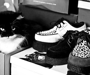 cat, creepers, and shoes image
