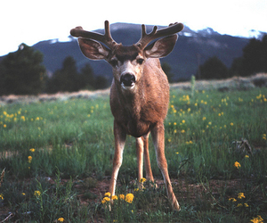 deer, animal, and nature image