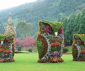 amazing, flowers, and owl image
