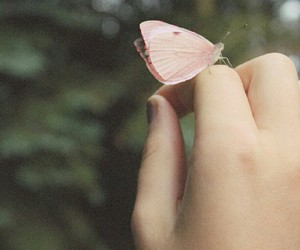 butterfly, photography, and pink image