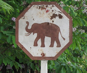 elephant, tropical, and sign image