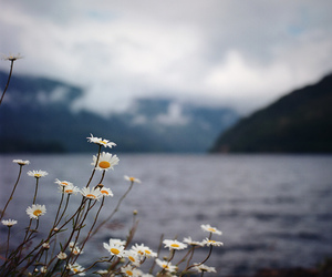 daisy, flowers, and landscape image