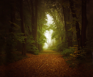 autumn, forest, and photo image