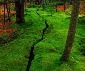 nature, Maine, and green image