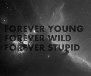 forever, stupid, and wild image