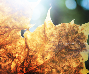 fall, green, and leaf image
