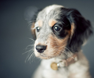 puppy, dog, and photography image