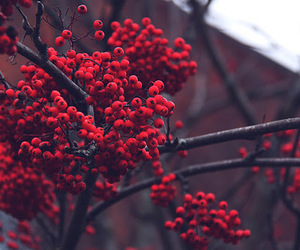 nature, red, and tree image