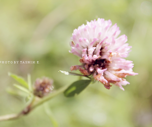 flower, summer, and nature image