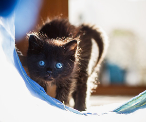 black, photography, and cat image