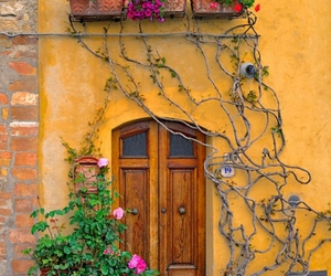 house, nice, and roses image
