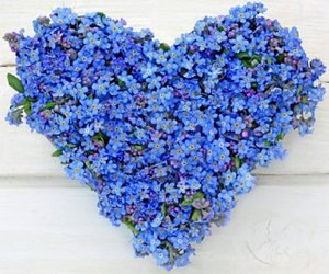 forget me not flowers image