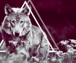 wolf, triangle, and animal image