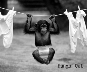 animals, black and white, and fun image