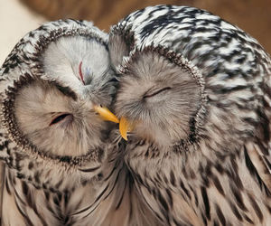 adorable, birds, and animals image