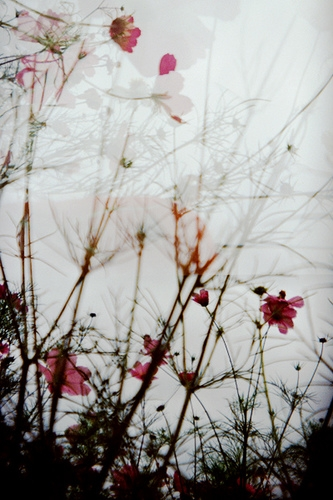 blurred, flora, and flowers image
