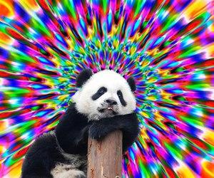 color, panda, and psicodelia image