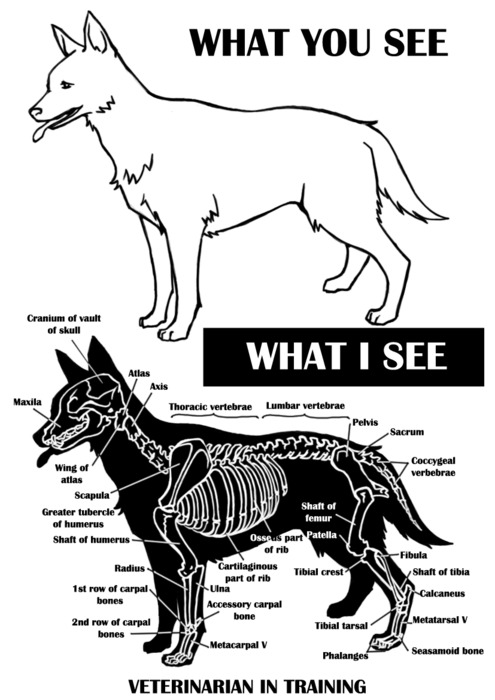 bones, veterinary, and dog image