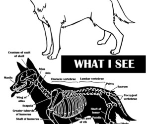bones, dog, and veterinary image