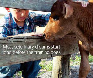 cow, dreams, and veterinary image