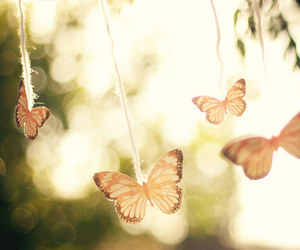butterfly, nature, and light image