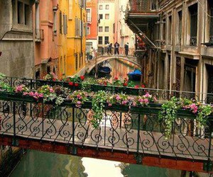 venice, italy, and flowers image