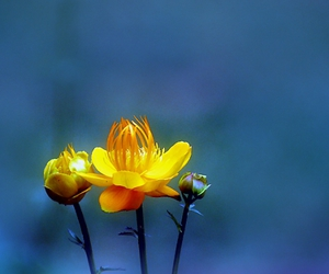 blue, flowers, and yellow image