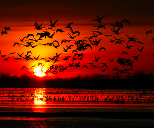 bird, sun, and sunset image