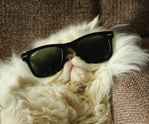 cat, funny, and sunglasses image
