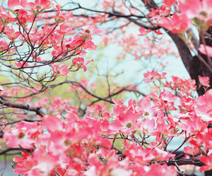 beautiful, cherry, and pink image