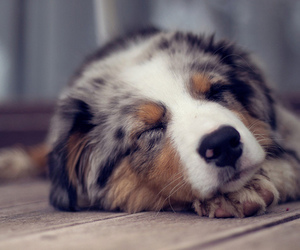 adorable, dogs, and photo image