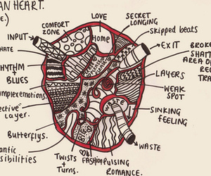 heart, drawing, and human image