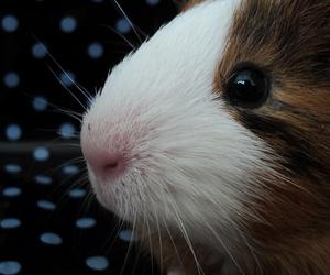 animal, focinho, and baby image